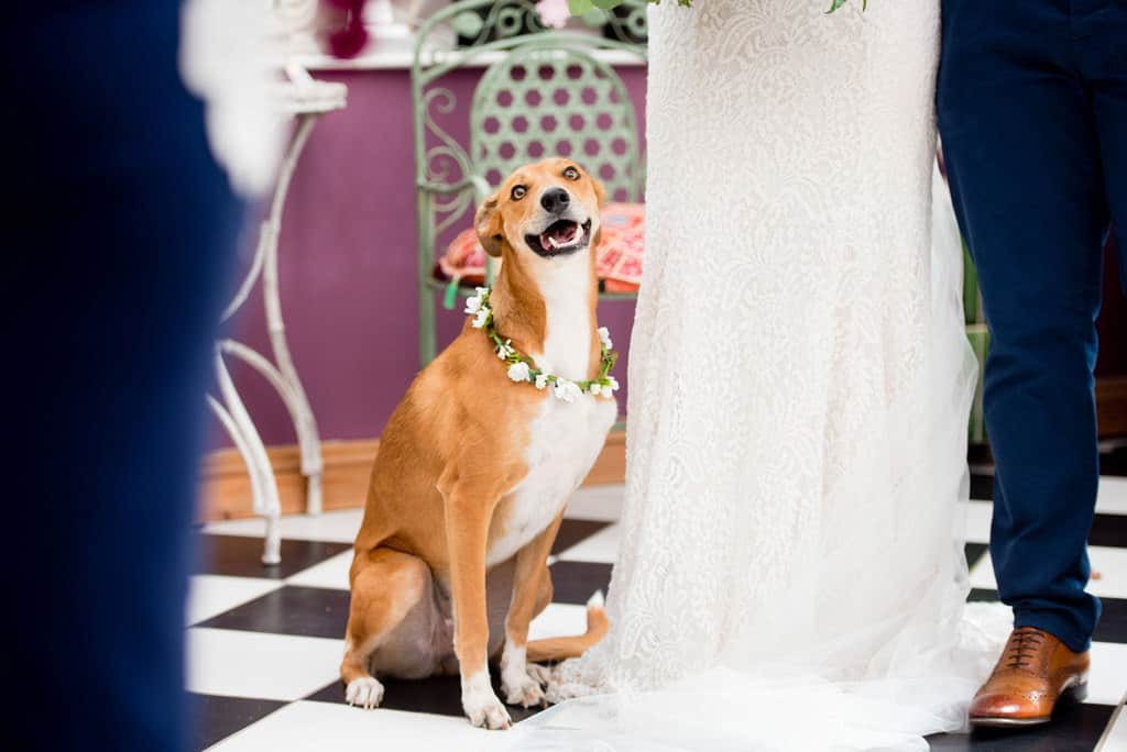 Dogs at wedding