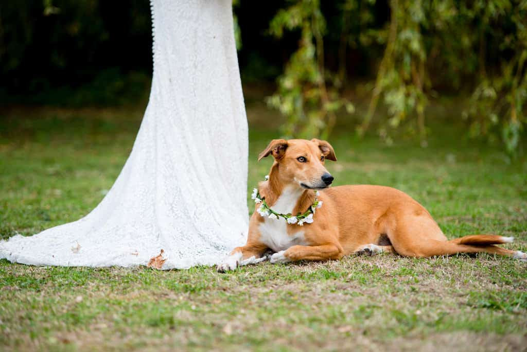 Bride and dog at wedding